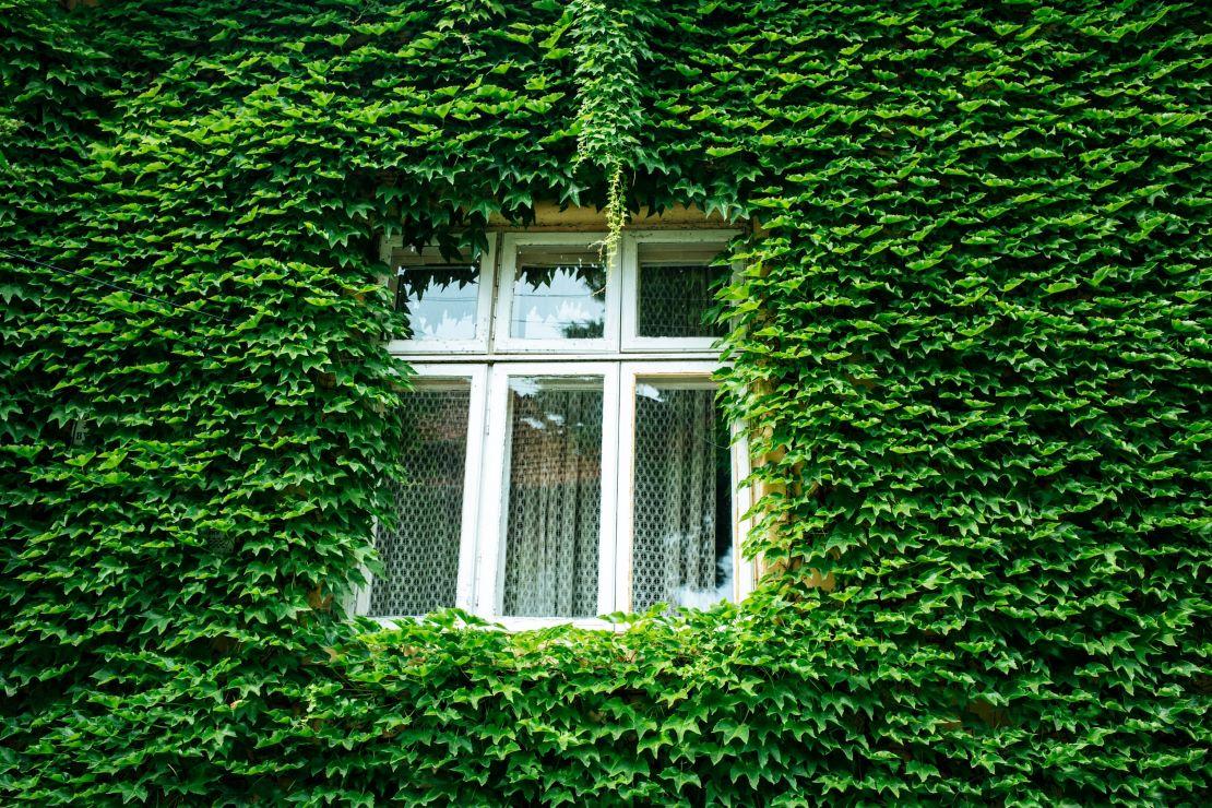 Maisons plus vertes : subventions pour améliorer le rendement énergétique.